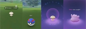 how to find ditto and catch it 2021
